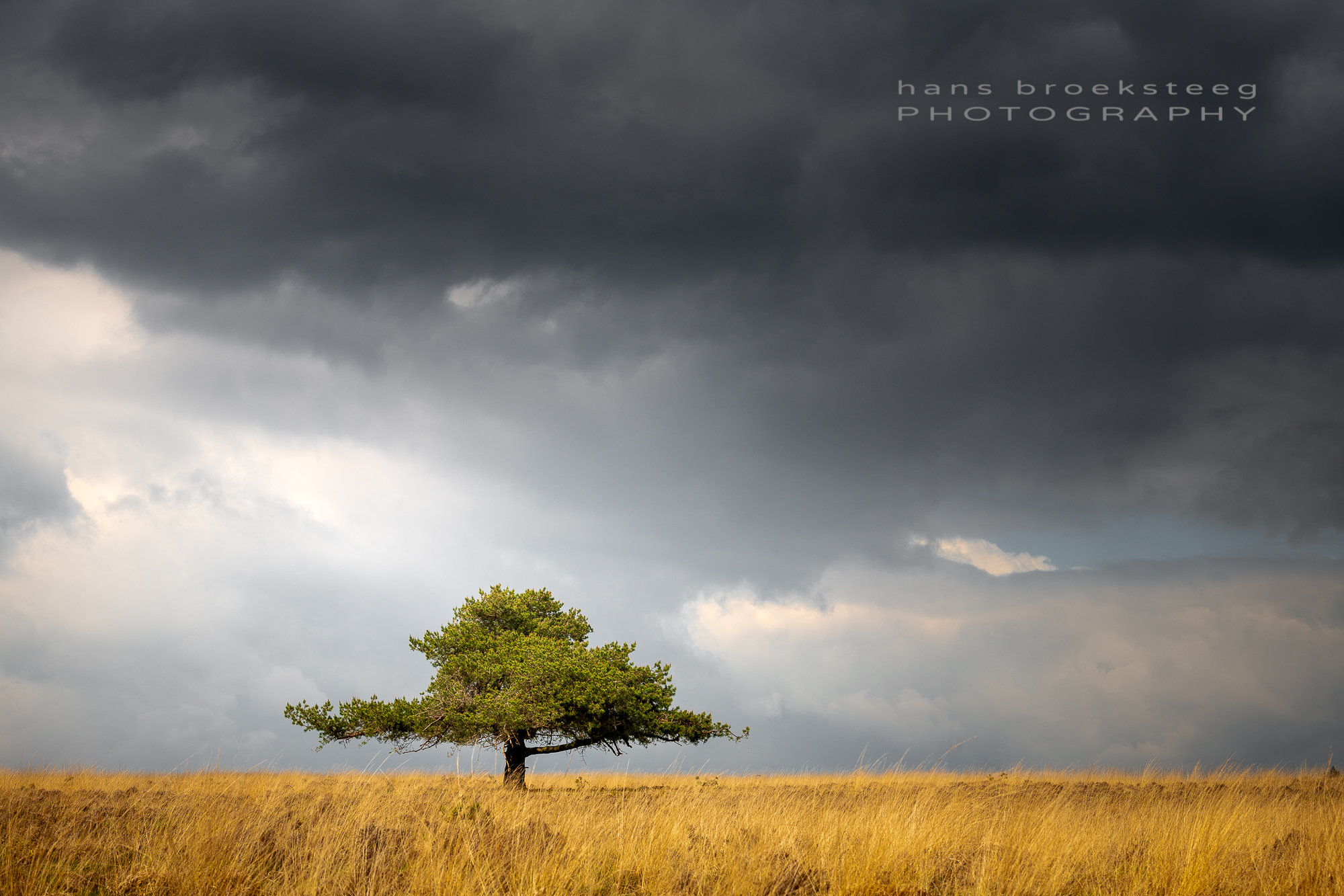 Pine tree, sunlight and clouds
