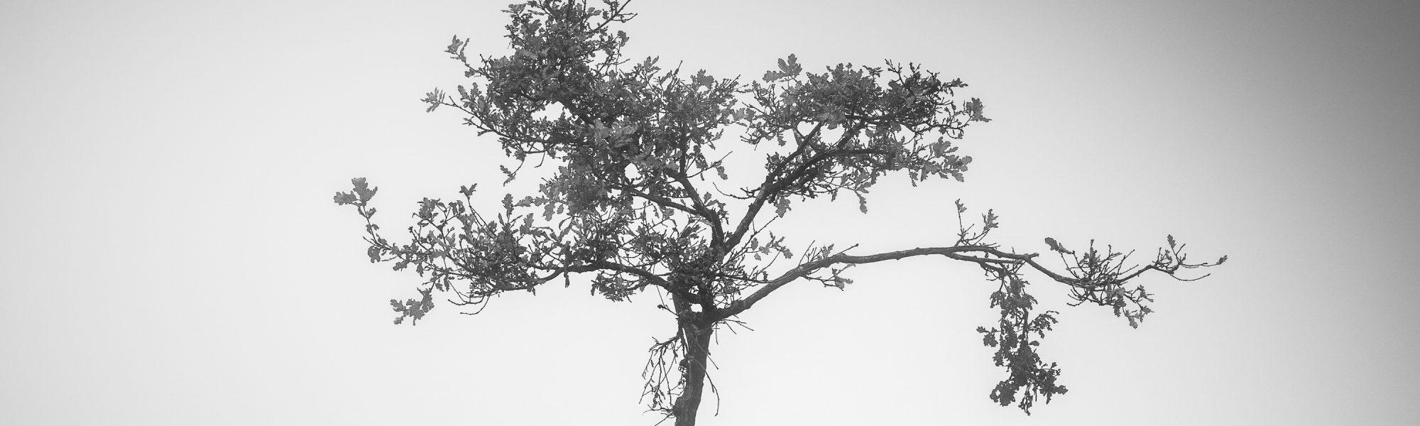 Little sapling