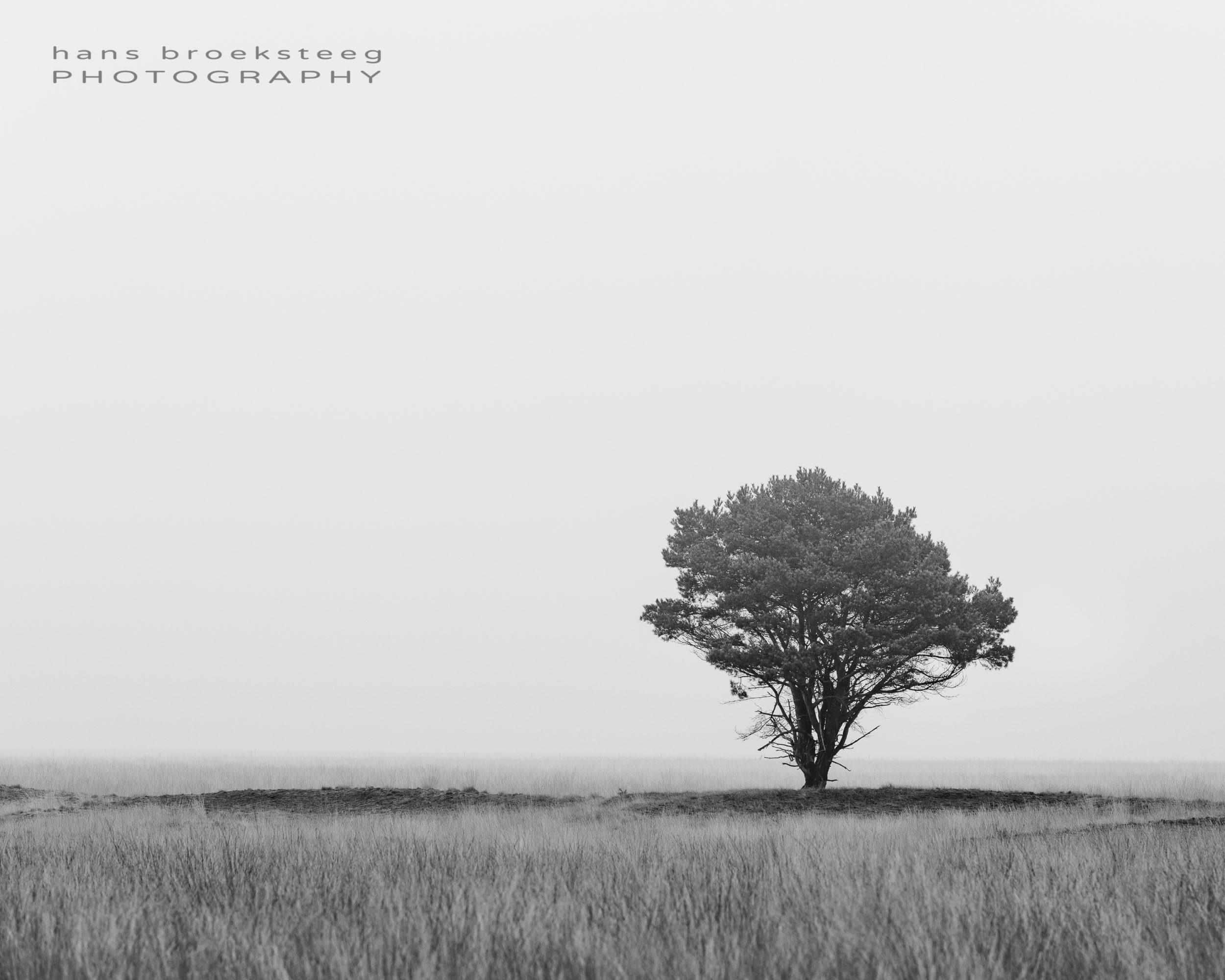 Lone line tree