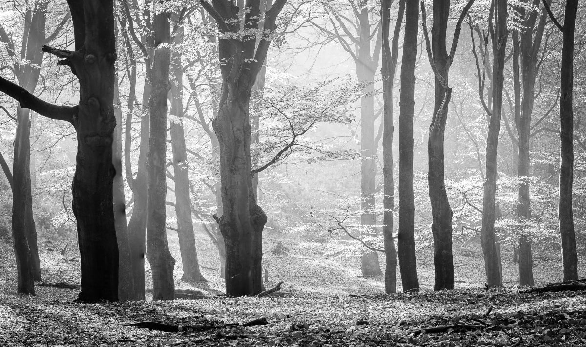 Backlit trees in black and white