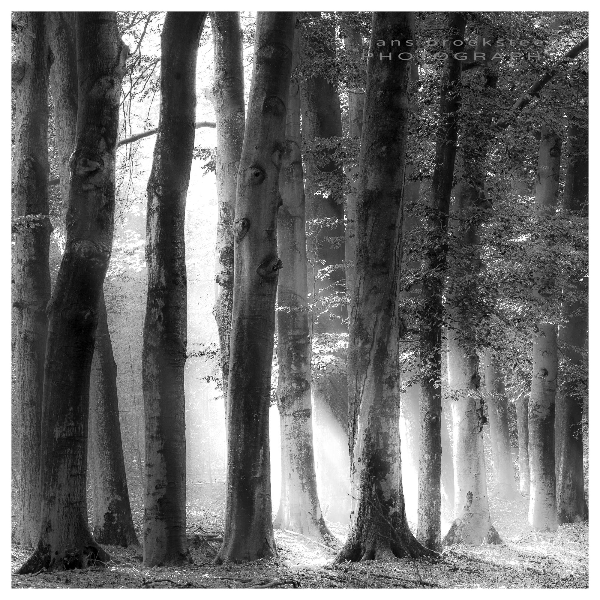 Woodland black and white