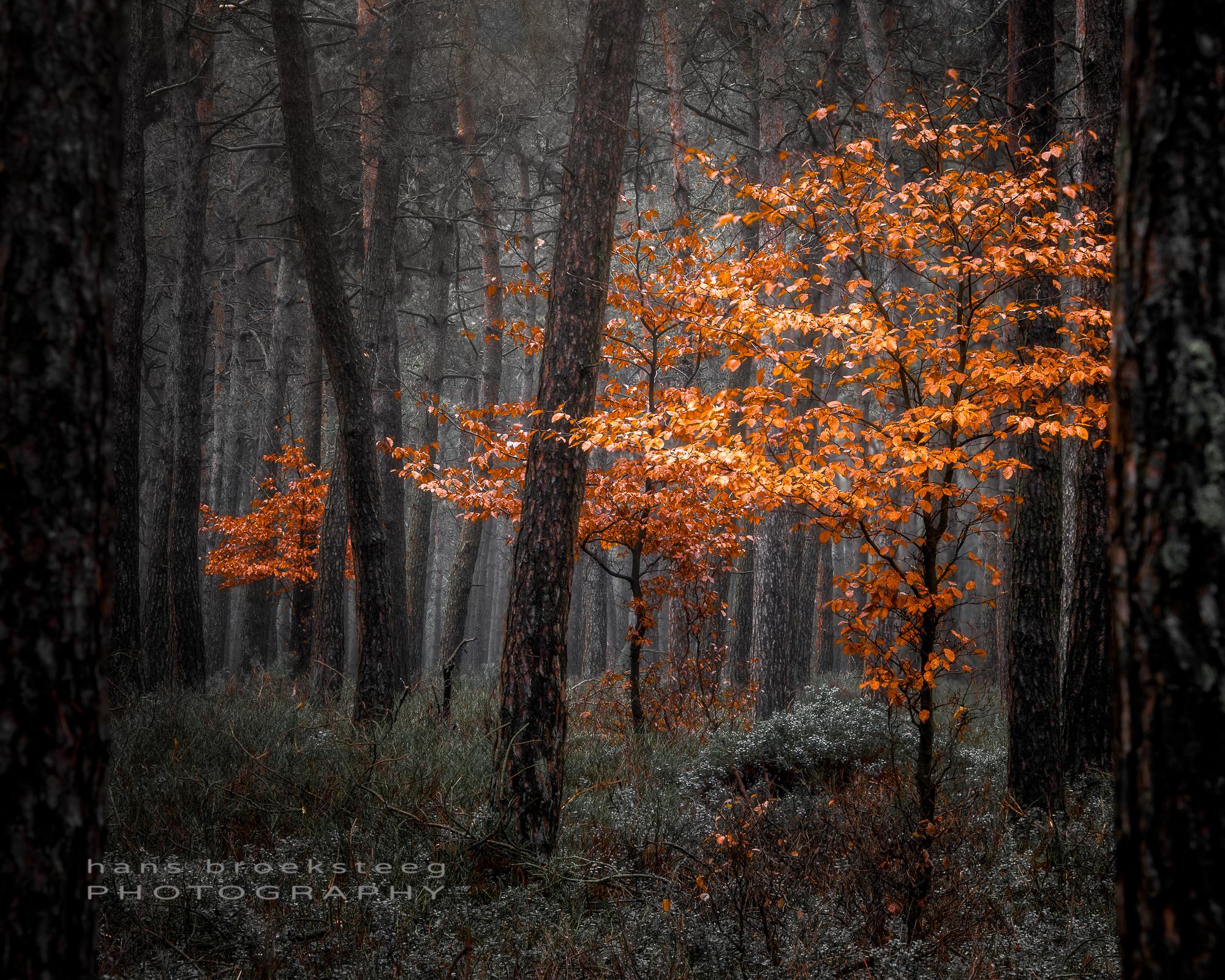 Between pines