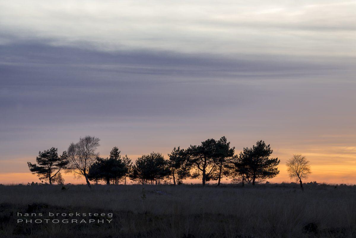 Trees in Deelerwoud, NL
