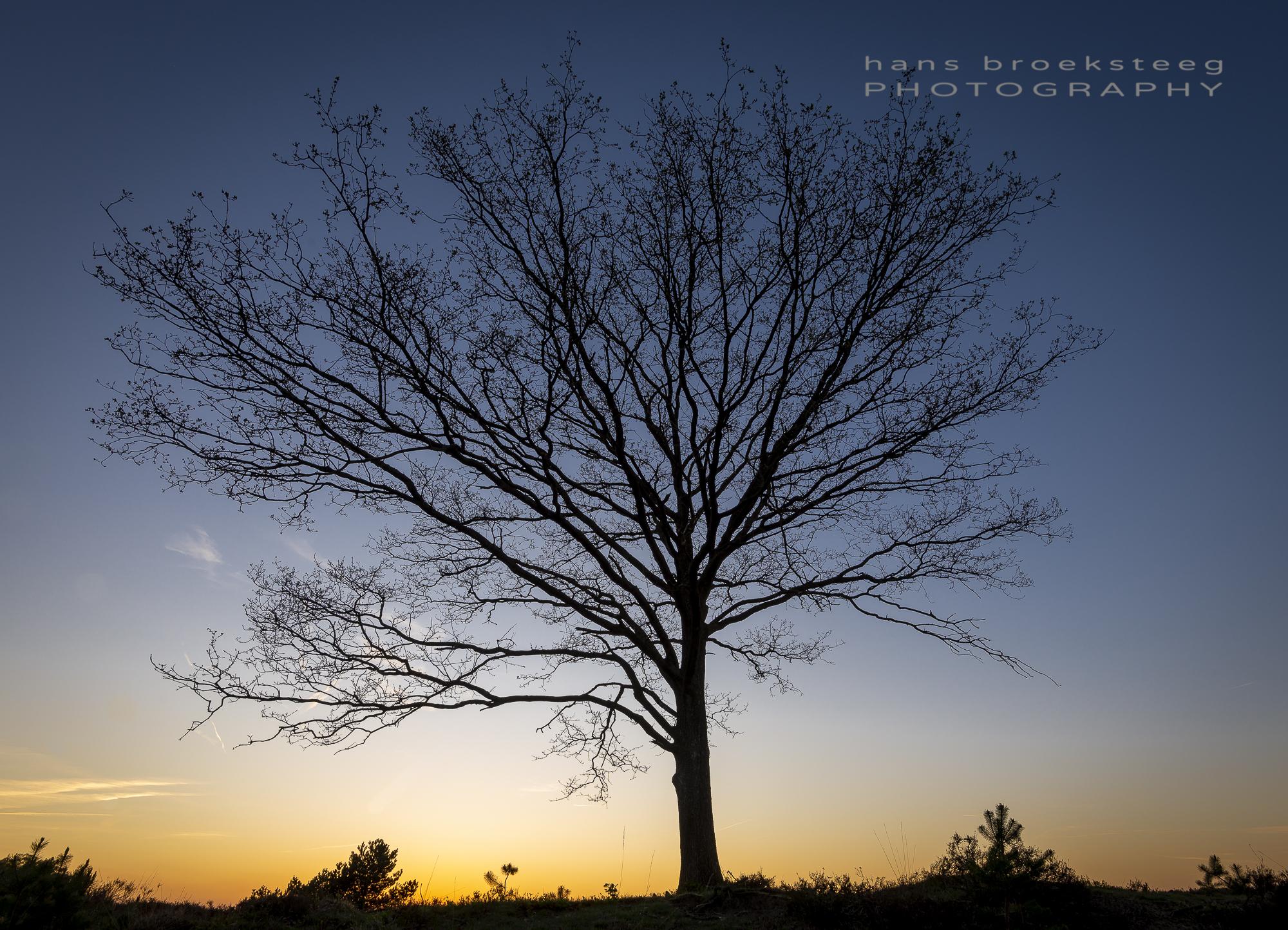 Solitair tree