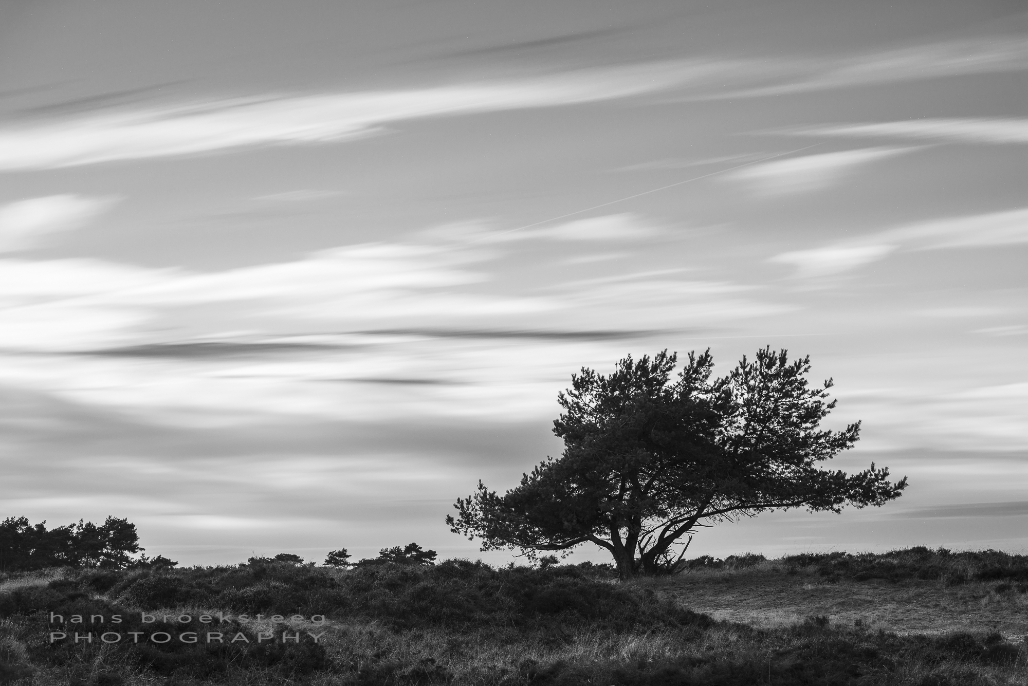 Lone tree with moving clouds in the sky