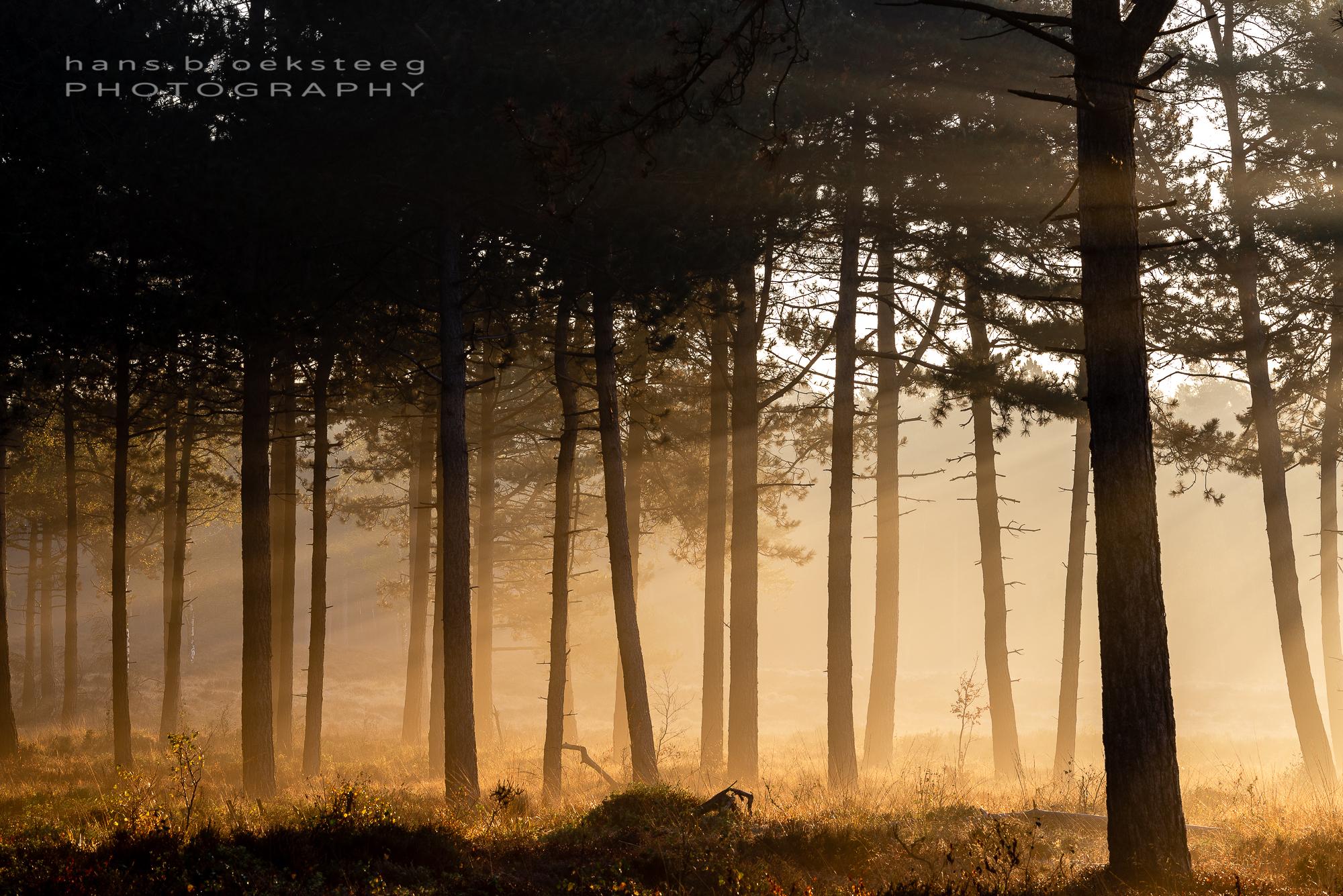 Stems in morning mist