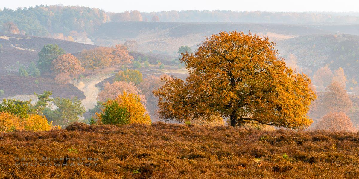 Autumn morning at De Posbank