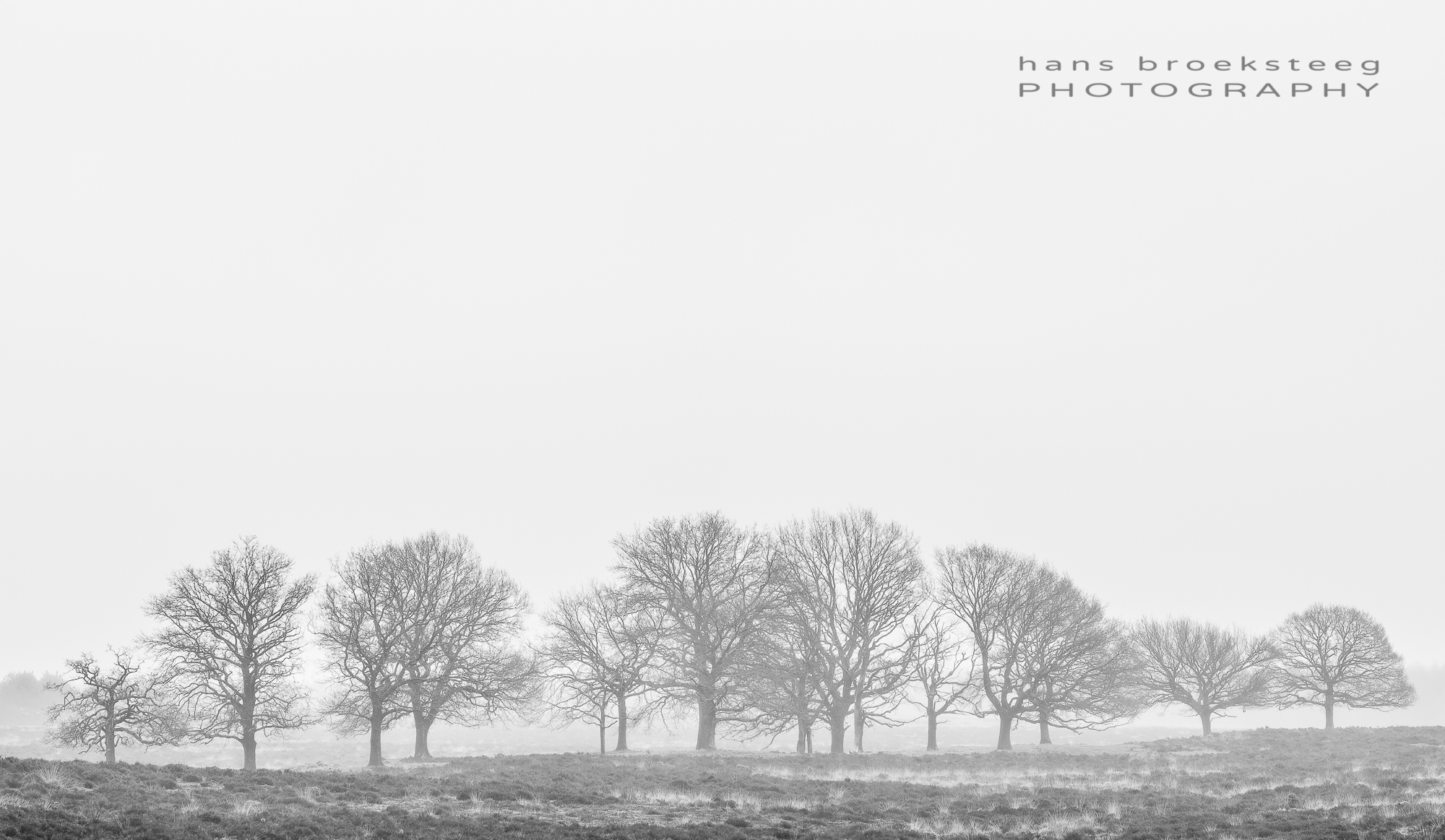 Row of trees in winter with hazy conditions