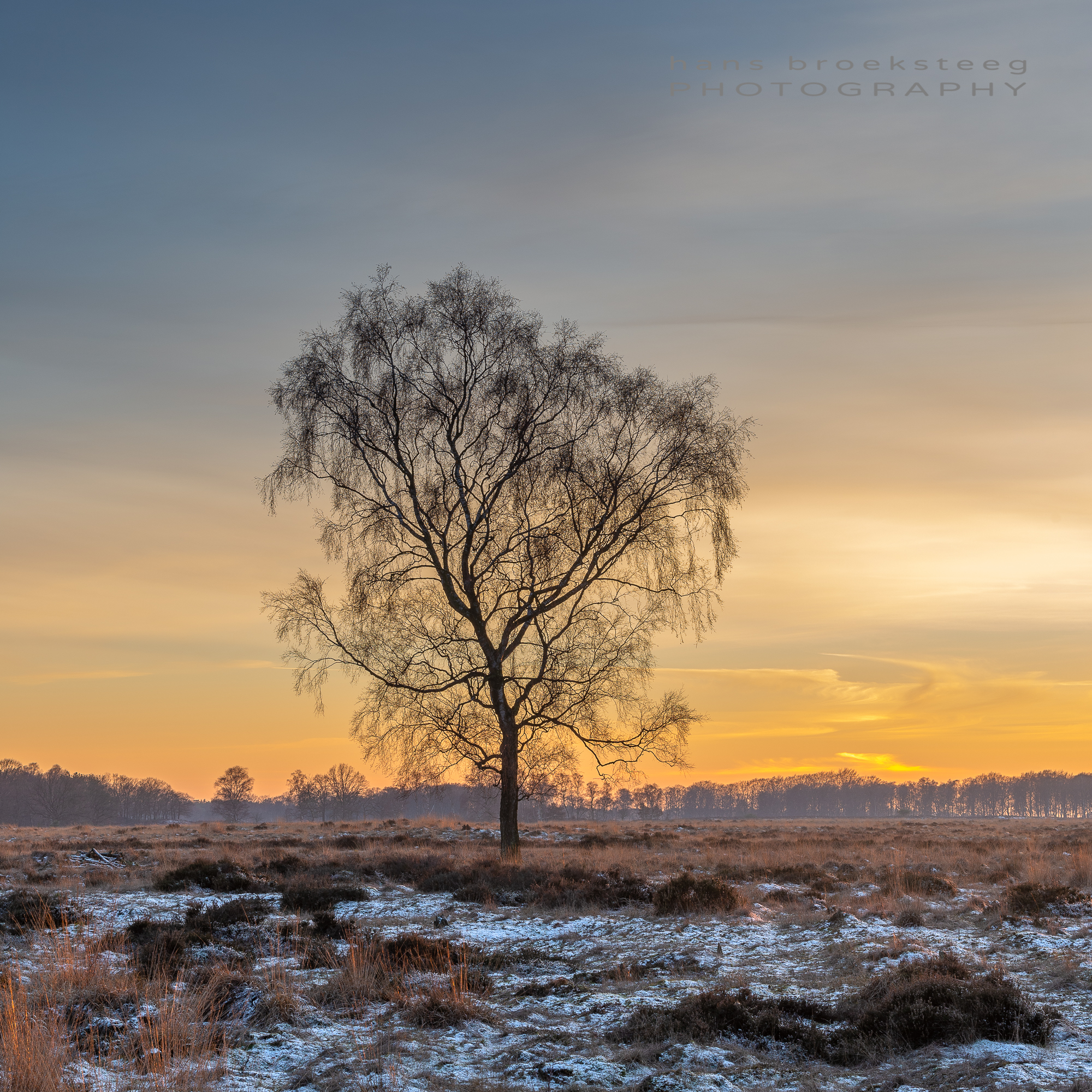 Lone tree in winter just before sunset