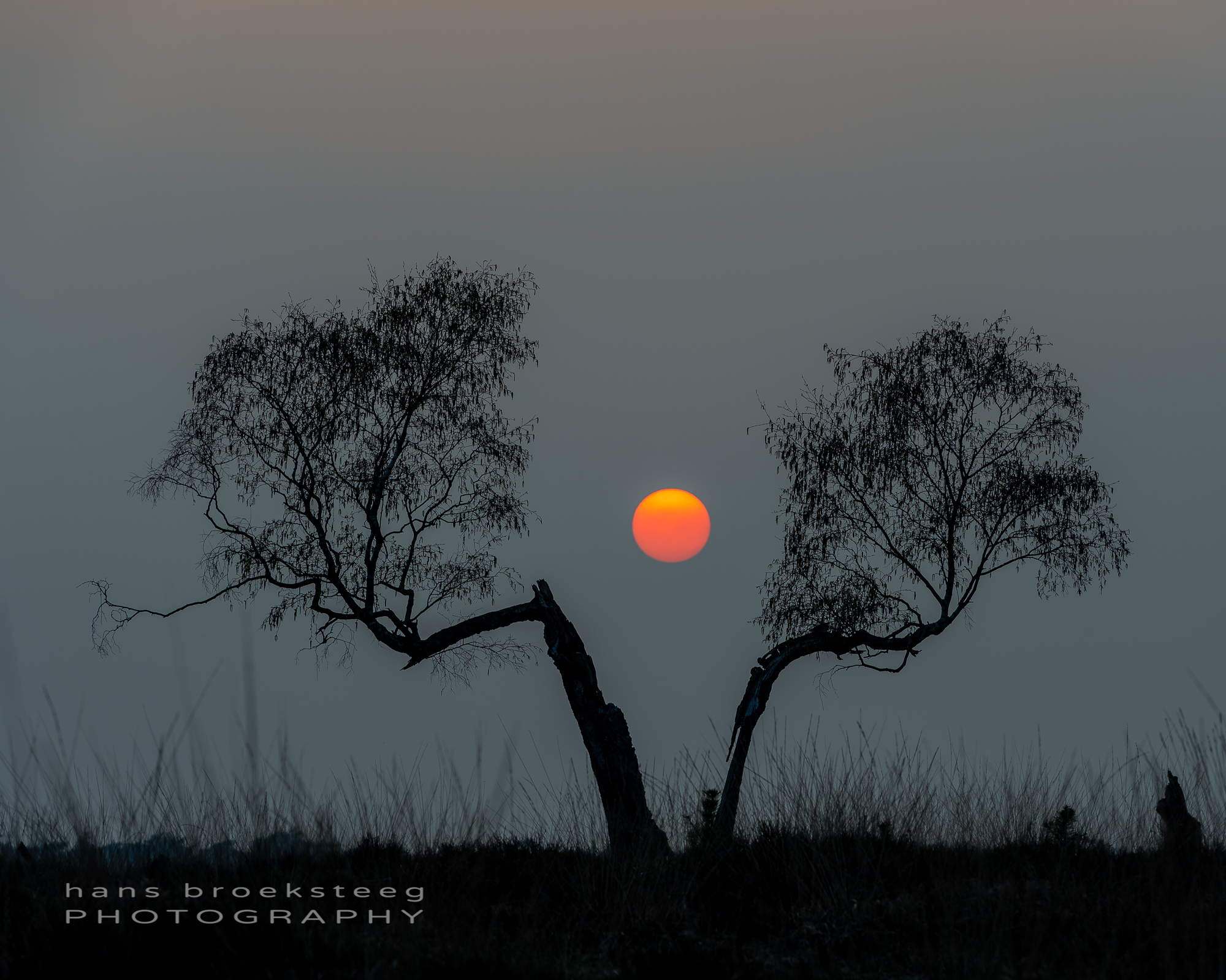 Split tree with sun in between during sunset