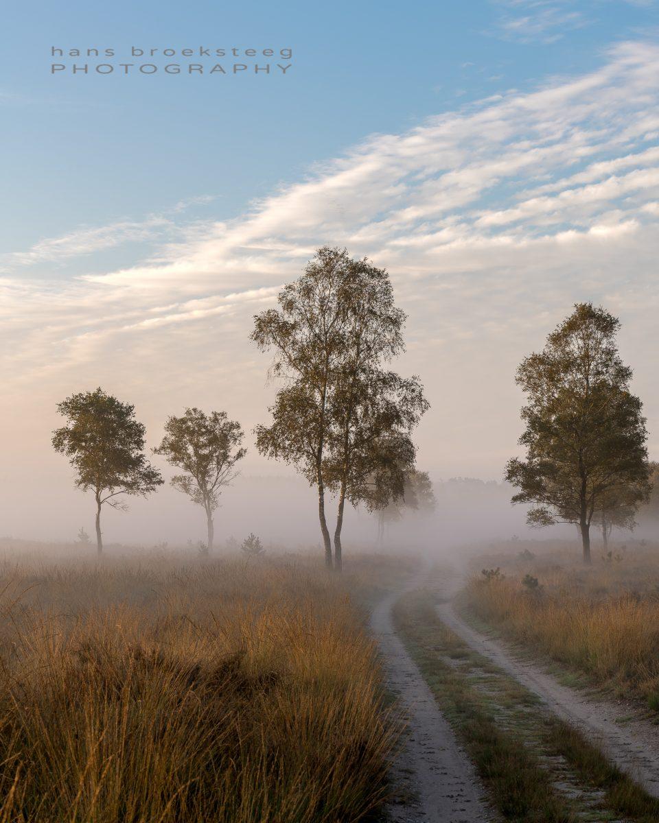 Morning mist over the heath