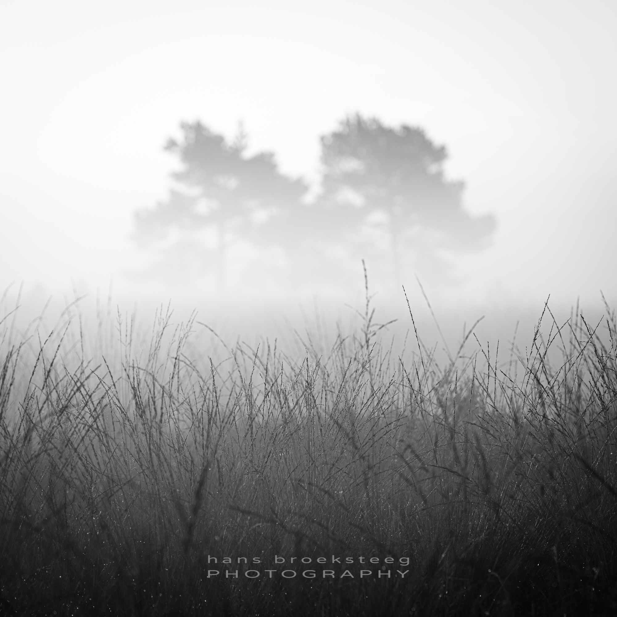 Mist and grass in black and white intimate landscape